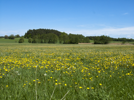 meadow4 by oosstock