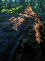 Dead wood new life by SumFaKingGuy