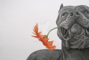 Staffordshire Terrier in graphite and color pencil by mo62