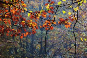 Leaves red by firepaved