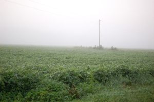 foggy field 2 by somestock