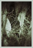 iPhoneography,   Bend by Gerald-Bostock