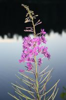 Beauty by the lake by Isabella3991