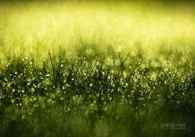 Morning Dew II by JoniNiemela