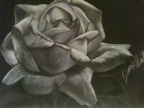 Another rose by MaelleB