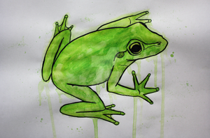 Frog by yokuns