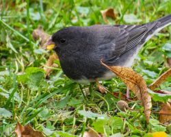 Conjuction Juncotion by CRGPhotography