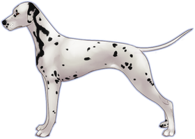 BPIS Isengards A Thing Call'd Jazz Di Eurico COA by Canidae-Mayhem