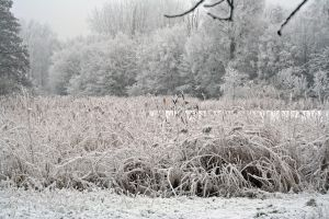 winterland 23 by priesteres-stock