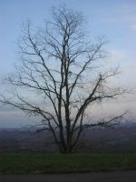 Tree on the Edge of Forever by Della-Stock