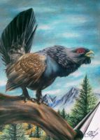 Wood Grouse : Capercaillie by GLORIPEACE