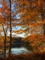Golden autumn view of the lake by Singinchic7