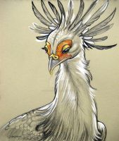 Secretary Bird by HouseofChabrier