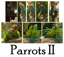 Parrots 2 by syccas-stock