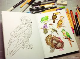 Birds sketching by alxferreiro
