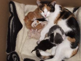 Mommy and 5 Babies by SerenaSilverMoon
