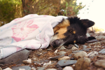Lassie sleeping at the beach by HelenLight