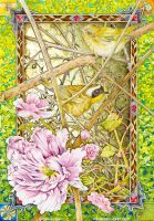 Common Yellowthroat warblers by Heliocyan