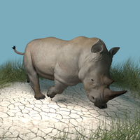 White Rhinoceros by SavannaW