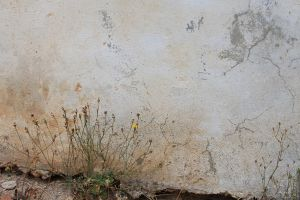 Cracked Wall by melemel