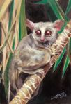 Handsome Galago by lousworld