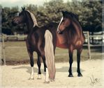 .:Pretty Ladies:. by BlueMoonStables