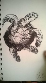 Sea Turtle by I-Am-CaCoon