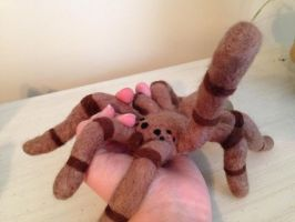 Needle Felted Tarantula by the-pink-dragon