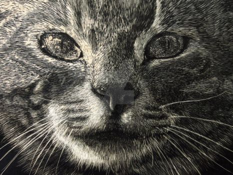 Cat on scratchboard Detail by Rathsi