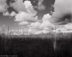 South Florida I by RoBBoX