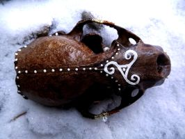 Norse Otter Skull ((For Sale!)) by Copperavi