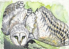 Barn Owl ACEO by AmandaTolleson