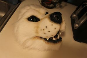 white wolf wip by wolvescanlove