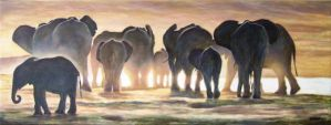 Elephants in Light by andylloyd