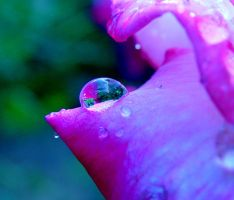 Drops by MeClaire