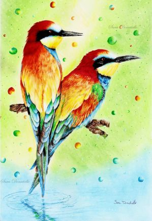 Rainbow Birds by saraPortrait