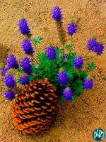 pine flower hdr by DCRIII