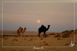 Beautiful  desert with camels by AMROU-A