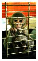 Prisoned Monkey by Piima