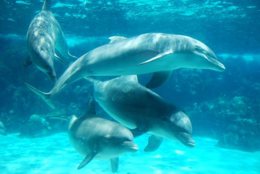 Dolphins At Play by KittyKayKay-96
