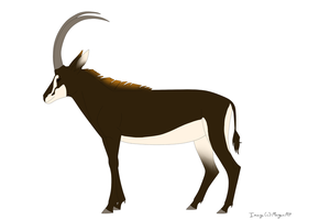 Sable Antelope by Morgan-Michele