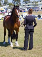 STOCK - Gold Coast show 258 by fillyrox