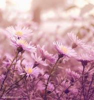 Flowers by alina0