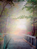 PREMIUM background - Bridge in the forest3 by Euselia