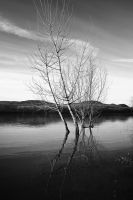 Trees in water 2 by Csipesz
