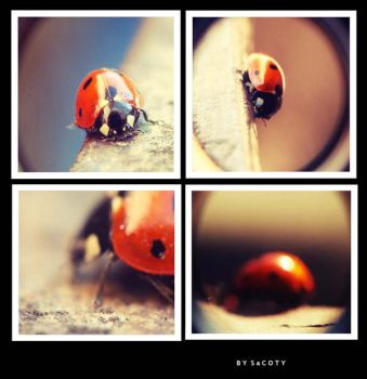 Red Dots by SaCOTY
