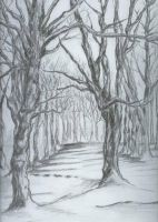 winter trees by black90