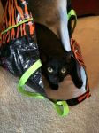 Cat in the bag by Cosmic--Chaos