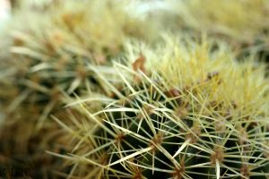 Prickly by petimouton
