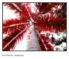 Red Palm by dnogueira